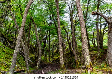 View of forest at Los Glaciares National Park in Argentine Patagonia