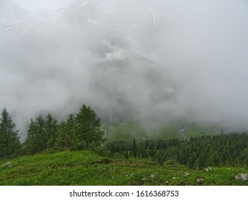 View of the forest from the mountain. Fog. Alps