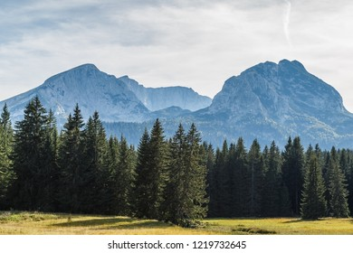 View of the forest and mountains in Montenegro's Durmitor National Park