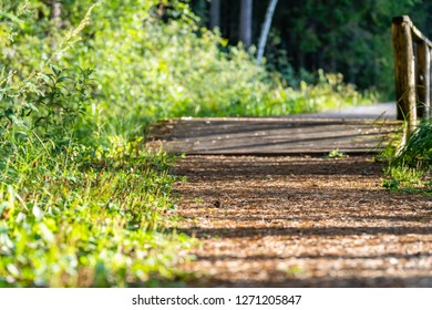 View of the Forest Road, heading deeper in the Woods on the Sunny Summer Day, Partly Blurred Image with Free Space for Text