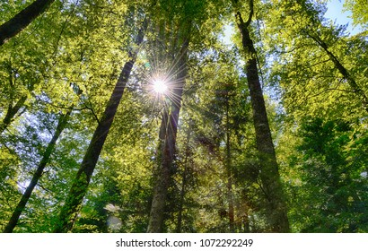 View a forest with sun spot and blur through the trees