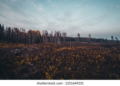 View of a forest that has been deforested with plants growing on a moody autumn evening, Finland