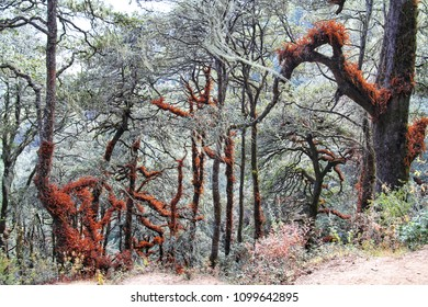 View of forest at trail to Taktshang Goemba or Tiger's nest monastery, Paro, Bhutan