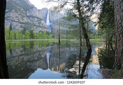View from the forest - Yosemite National Park, California