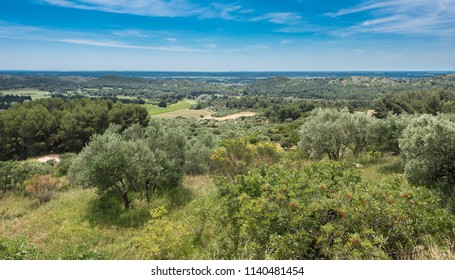 View from the fortress Les Baux-de-Provence into the valley on olive groves. Bouches du Rhone, Provence, France, Europe.