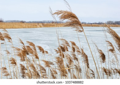 View of a Frozen Fishpond Through Reeds in Winter / blue sky