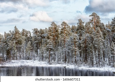View of the frozen pinetree forest and river in winter