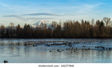 View of a frozen urban lake with Mount Baker in the background and ducks in a small section of open water. Mill Lake in Abbotsford British Columbia