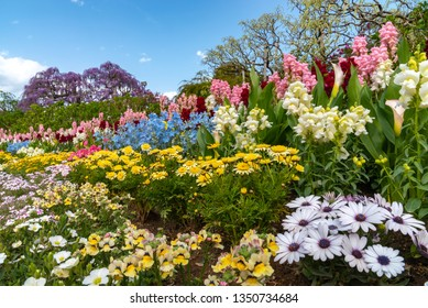 View of full bloom colorful multiple kind of flowers in springtime sunny day at Ashikaga Flower Park, Tochigi prefecture, Famous travel destination in Japan