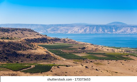 View from Galilee Mountains to Galilee Sea, Kinneret, Israel. Golan Heights. Wonderful landscape with blue fog on the background and bright colors. Gradient from green to blue. Vineyard on foreground.