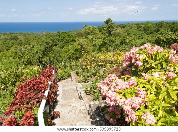 View Garden Jungle Landscape Below Jamaica Stock Photo Edit Now