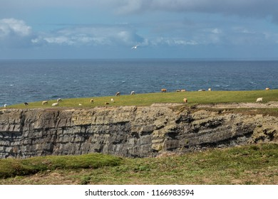 View from Georges Head, Kilkee, County Clare,Ireland, August 2108