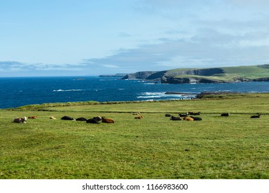 View from Georges Head, Kilkee, County Clare, Ireland. August 2018