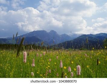 View of the Giewont, meadow near Zakopane, Tatry Mountains, Poland - Shutterstock ID 1043880070