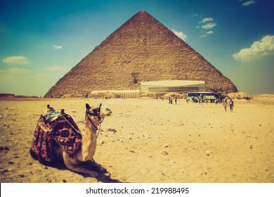 View of the Giza Pyramids, the tourists near them and the camel in the foreground. Egypt. Cairo. Filtered image:cross processed effect.