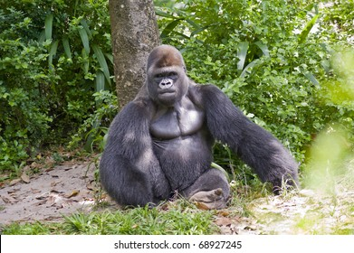 View of a gorilla sitting in the wild.