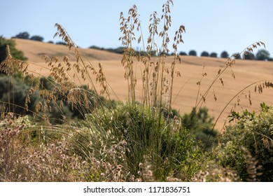 view of grain fields and vineyards on rolling hills of Abruzzo. Italy