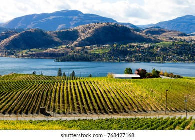 View of grape vineyards overlooking Skaha Lake between Penticton and Okanagan Falls located in the Okanagan Valley near Penticton, British Columbia, Canada.