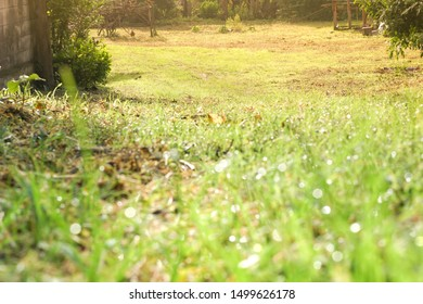 View of the grass fields in the countryside from blur close to the lawn at morning