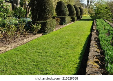 View of a Grass Pathway in a Peaceful Garden