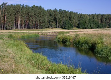 view of the grassy riverside near the coniferous forest