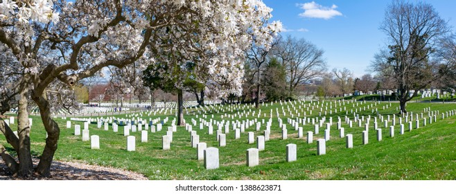 View of gravestones in Arlington National Cemetery in springtime, Washington DC, District of Columbia, United States of America 22-3-2019