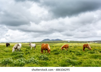 View of grazing horses on the grass under cloudy sky. Focus on horses.