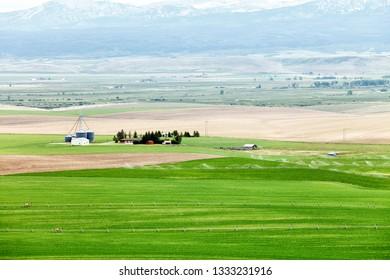 An view of green alfalfa fields growing in Idaho