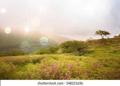 View at green fields in Salalah, Oman