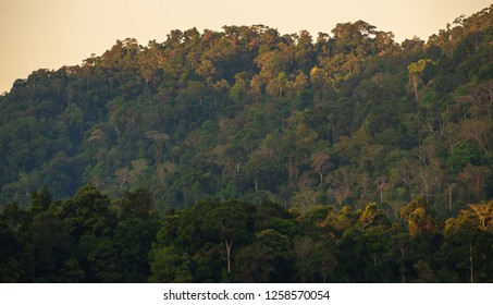 view of green forest