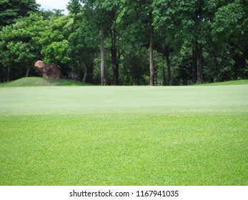 View of green grass field with the forest background