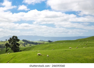 View of green hills in New Zealand.