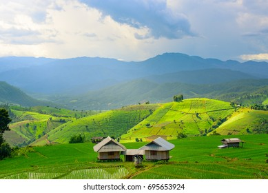 view of green rice fields terrace mountain with cottage in countryside Land with grown plants of paddy and sea of fog at Pa Pong Piang, Thailand.