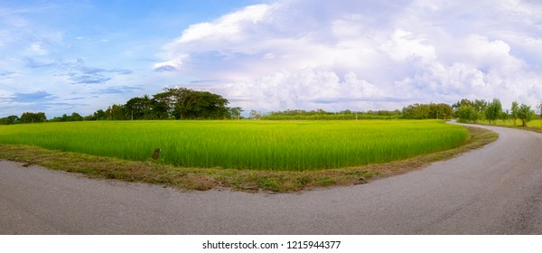 View of green rice paddy field landscape in Thailand.