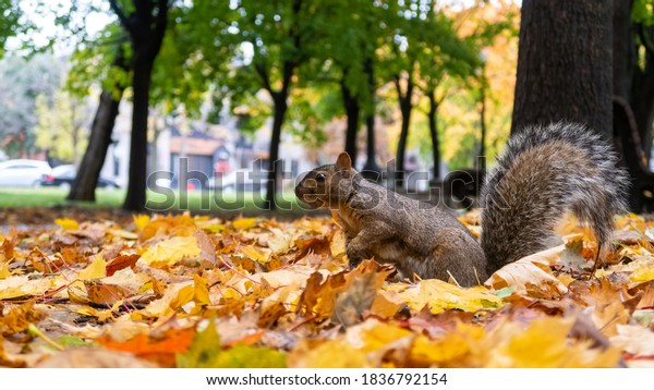 view-grey-eastern-squirrel-standing-600w