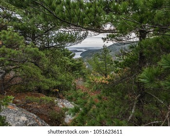View of the Gulf of Maine seen through the pine trees from Acadia Mountain, Acadia National Park.