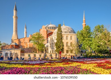 View of Hagia Sophia and Largest Carpet of Tulips of the World in Sultanahmet for tulip festival in Istanbul,Turkey.21 April 2018