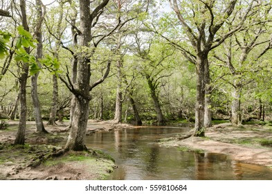 A view of Hatchet Pond in the new forest national park