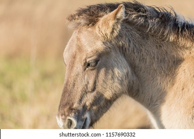 view of the head of a beige horse