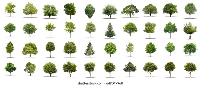 VIew of a High definition collection Tree isolated on a white background