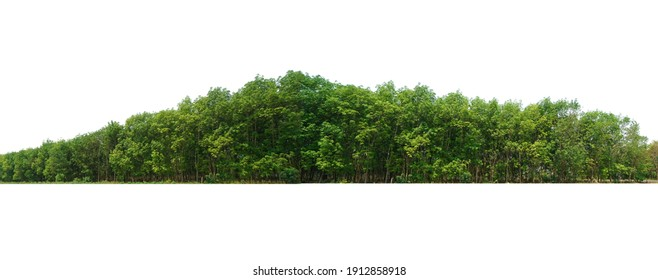 View of a High definition Treeline isolated on a white background