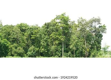 Vista de una línea de árbol de alta definición aislada en un fondo blanco