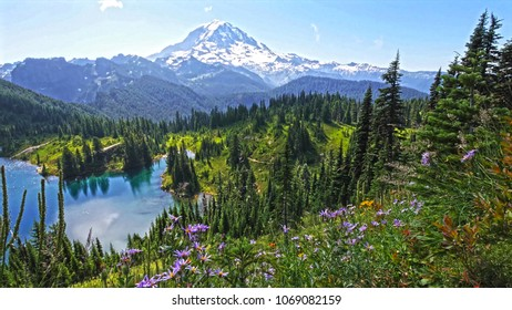View of the high mountains, mountains covered with green trees, around the forest, beautiful violet flowers, cloudy blue sky, Mount Rainier National Park