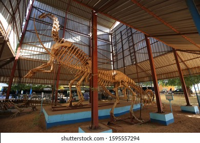 View of a high tyrannosaur skeleton located in Boubou Hama museum, Niamey, Niger, West Africa. November, 9, 2019. Standing carnivore prehistoric animal in a large place covered by steel panels.