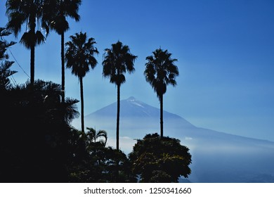 """View of the highest mountain of Spain, the """"Teide"""" in Tenerife. In the foreground in almost black are the silhouettes of three very large palm trees and a few other plants."""