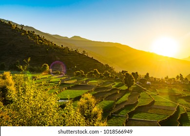 View of Highland agricultural step terrace fields of wheat during sunrise in the indian himalayan village region of Garhwal, Uttarakhand, India.