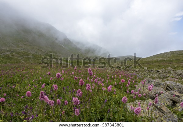 View of the highland and flowers from north of Turkey.