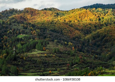 view of the hill and autumn trees with a sunspot