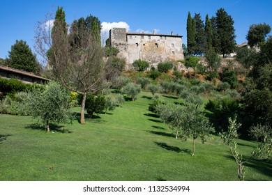 View of hill with olive trees and medieval building at Borgo di Tragliata, Lazio, Italy.