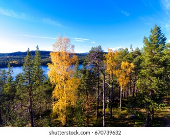 View from a hill over forest in autumn colors in Finnish Lapland